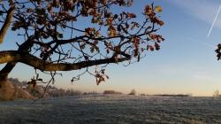 oak-tree-november