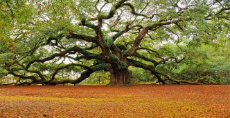 yew-tree-of-life