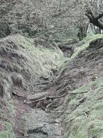 path to dartmoor