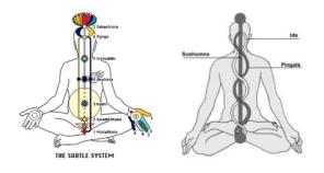 the subtle system