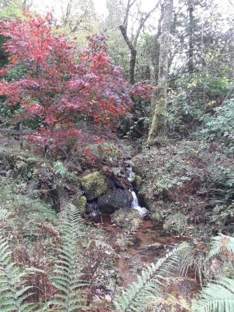 walk to faery woods